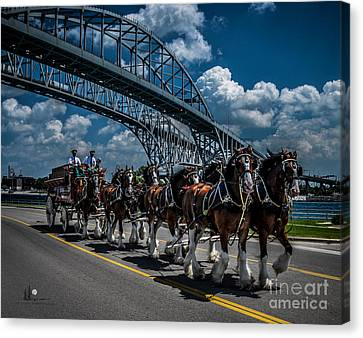 Clydesdales And Blue Water Bridges Canvas Print