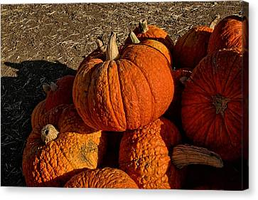 Knarly Pumpkin Canvas Print by Michael Gordon