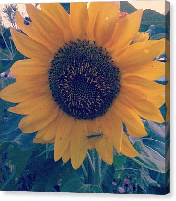 Canvas Print featuring the photograph Co-existing by Thomasina Durkay