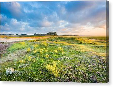 Coast Sunrise Canvas Print