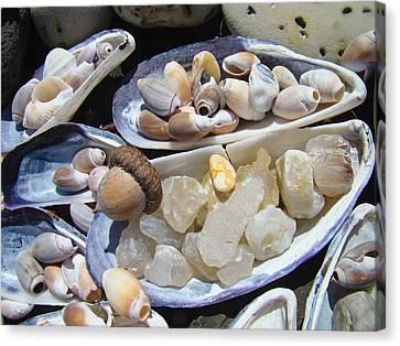 Coastal Beach Art Prints Agates Shells Acorn Canvas Print by Baslee Troutman
