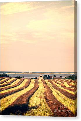 Coastal Farm Pei Canvas Print by Edward Fielding