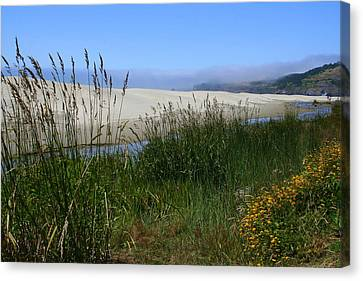 Coastal Grasslands Canvas Print