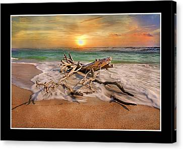 Coastal Morning  Canvas Print by Betsy Knapp
