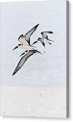 Coastal Skimmers Canvas Print