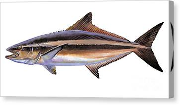 Cobia Canvas Print by Carey Chen