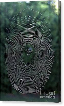 Cobweb Canvas Print by Bernard Jaubert