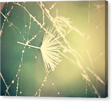 Cobweb Dandelion Seed Canvas Print by Candice Trimble
