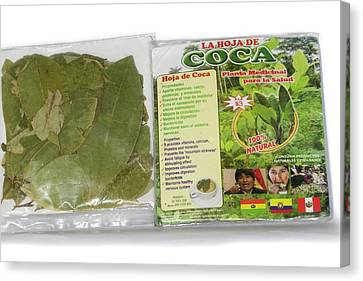 Coca Leaves From Peru Canvas Print by Dr Morley Read