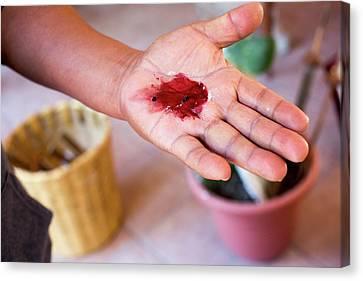Artisan Canvas Print - Cochineal Dye by Jim West