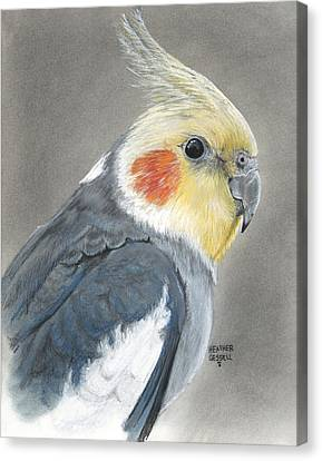 Cockatiel Canvas Print by Heather Gessell