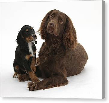 Cocker Spaniel And Tricolor Pup Canvas Print by Mark Taylor