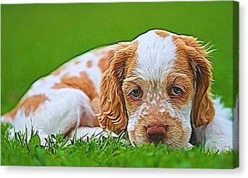 Cocker Spaniel Puppy In Grass Canvas Print by Dan Sproul