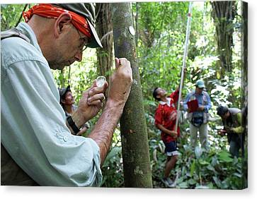 Cocoa Tree Pathogen Research Canvas Print