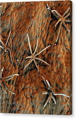 Cocoa Tree Trichomes Canvas Print by Stefan Diller