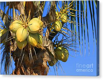 Canvas Print featuring the photograph Coconut 2 by Teresa Zieba