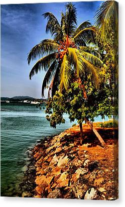 Coconut Paradise. Canvas Print by Siti  Syuhada