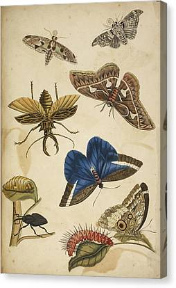 Cocoon Canvas Print by British Library