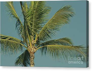 Cocos Nucifera - Niu - Palma - Po'olenalena Beach Maui Hawaii Canvas Print by Sharon Mau