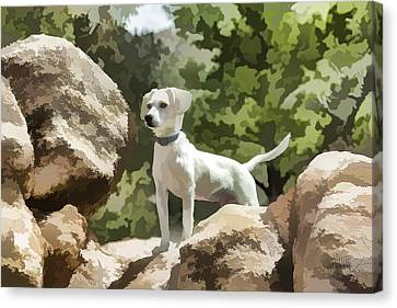 Cody On The Rocks Canvas Print