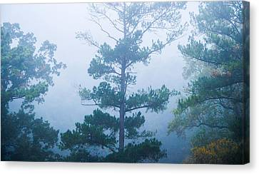 Cold And Mysterious Canvas Print by Shelby  Young