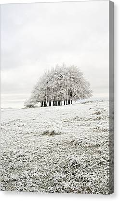 Cold Canvas Print by Anne Gilbert