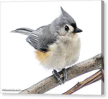 Cold But Tough Titmouse Canvas Print by LeeAnn McLaneGoetz McLaneGoetzStudioLLCcom