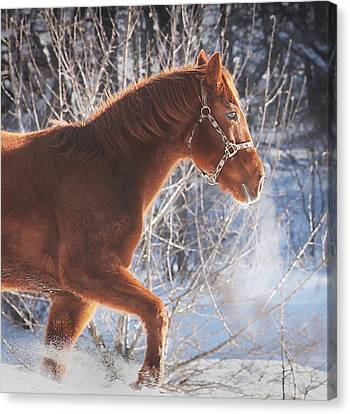 Cold Canvas Print by Carrie Ann Grippo-Pike