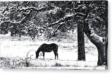 Canvas Print featuring the photograph Cold Comfort by Julia Hassett