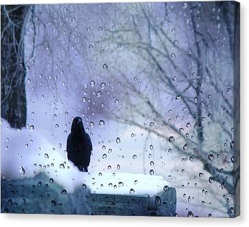 Cold Crow Canvas Print by Gothicrow Images