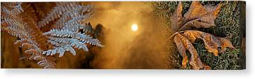 Cold Feet Leaves Canvas Print by Panoramic Images