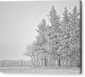 Cold Lace Canvas Print by Odd Jeppesen