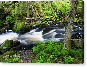 Maine Mountains Canvas Print - Cold Stream In Maine's Northern Forest by Jerry and Marcy Monkman