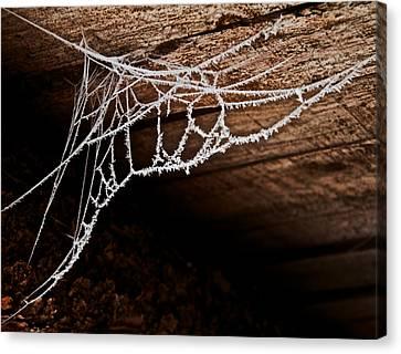 Cold Web Canvas Print by Odd Jeppesen