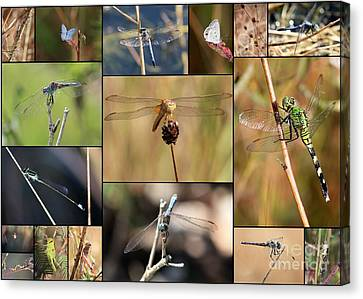 Grasshopper Canvas Print - Collage Marsh Life by Carol Groenen