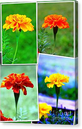 Collage Of Marigolds Canvas Print by Judy Palkimas