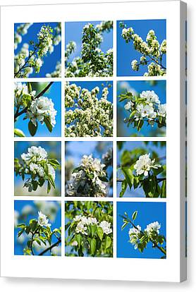 Collage Spring Blossoms 1 Canvas Print by Alexander Senin