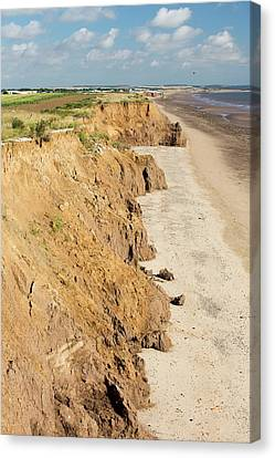 Collapsed Coastal Cliffs Near Aldbrough Canvas Print by Ashley Cooper