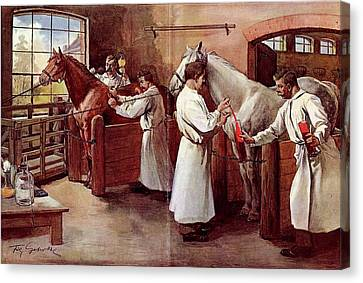 Horse Stable Canvas Print - Collecting Horse Blood by National Library Of Medicine