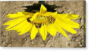 Collecting In The Sun Canvas Print by John Debar