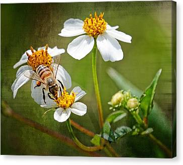 Canvas Print featuring the photograph Collecting Pollen by Dawn Currie