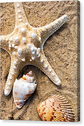 Collecting Shells Canvas Print
