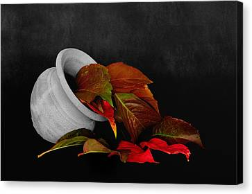 Collecting The Autumn Colors Canvas Print by Marwan Khoury