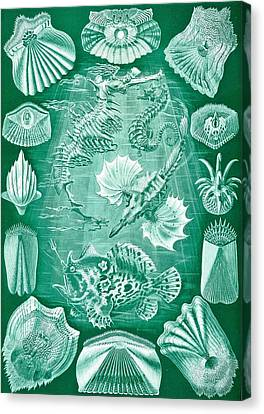 Collection Of Teleostei Canvas Print by Ernst Haeckel