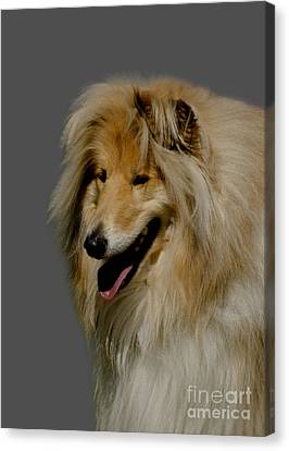 Doggy Cards Canvas Print - Collie Dog by Linsey Williams