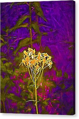 Canvas Print featuring the photograph Color 5 by Pamela Cooper