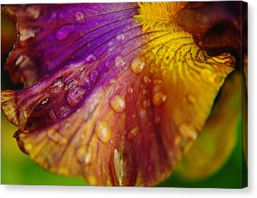 Color And Droplets Canvas Print by Jeff Swan