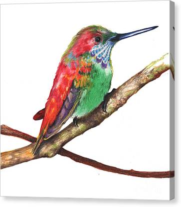 Canvas Print featuring the drawing Color Bird 9 by Anthony Burks Sr