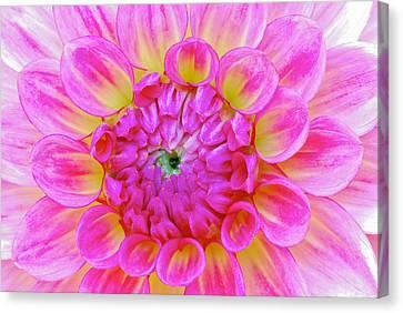 Color Burst Canvas Print by Michael Hubley