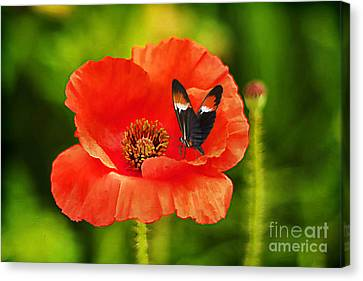 Color Coordinated Canvas Print by Darren Fisher